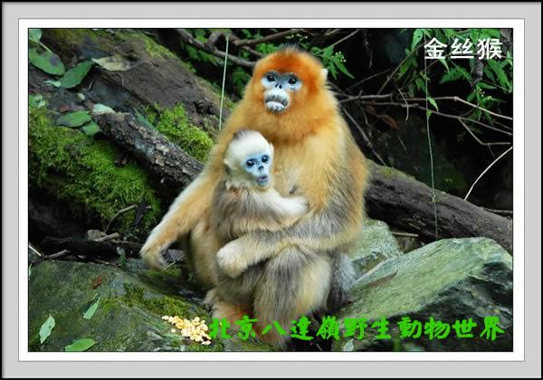八达岭野生动物园之网上动物园