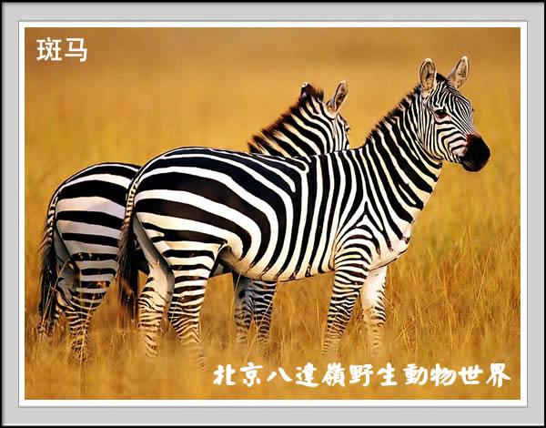 热带动物 - 八达岭野生动物园之网上动物园